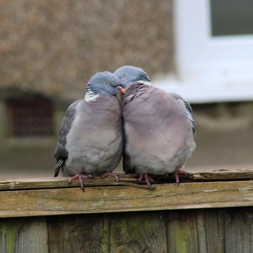 Ive-got-my-love-to-keep-me-warm