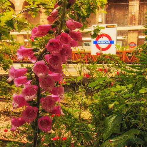4077-N1-Barbican-Station-Pop-up-Garden-EC1A-4JA