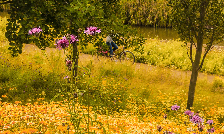 4588-Olympic-Park-thistle-biker