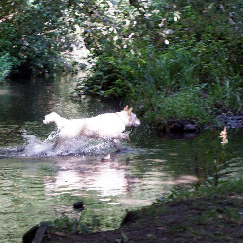 2016-08-10-Sutton_Wandle_Summer_Fauna_Having-a-wonderful-Chase
