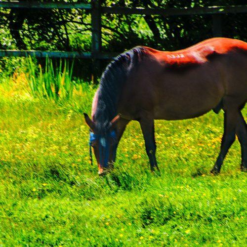 5787-horse-grazing-near-Sough-branch-grand-union