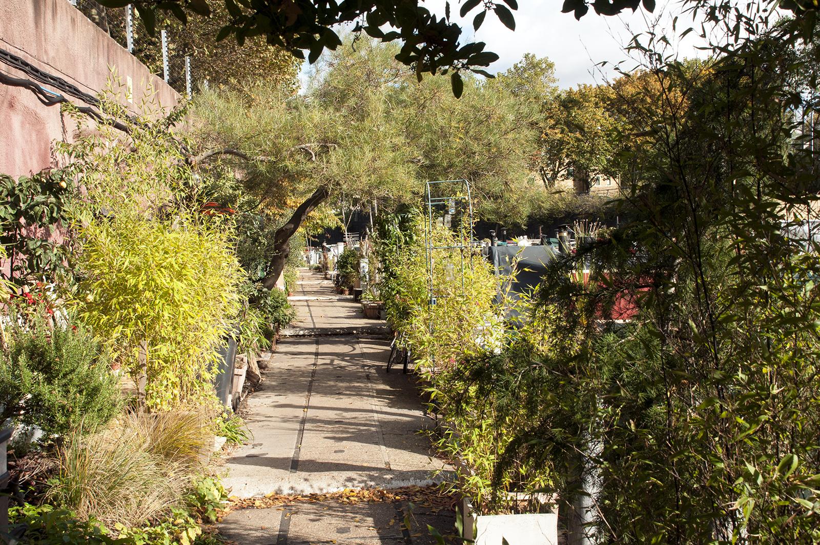 2016-10-18-Camden_Regents-Canal_Autumn_Flora-Narrowboat-Gardens-beside-the-Canal