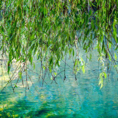 20161005_Greenwich_Tarn-Bird-Sanctuary_Golden-Emerald-Lake