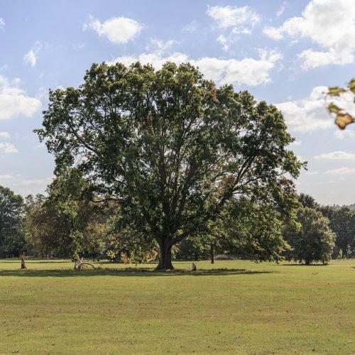 20161005_Greenwich_avery-hill_Tree
