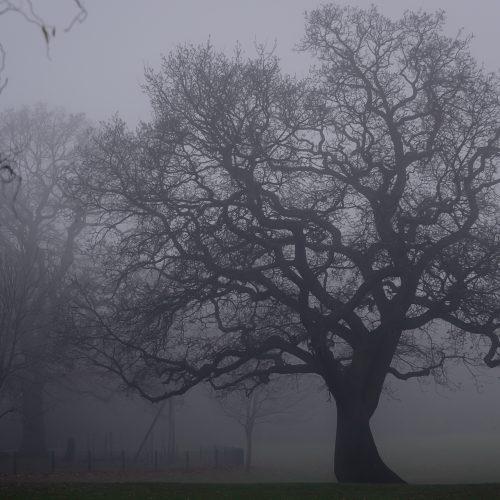 Foggy-Tree-03
