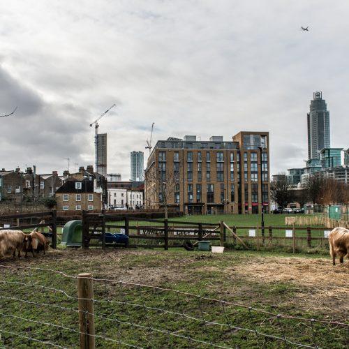 Vauxhall-City-Farm-DSP3985