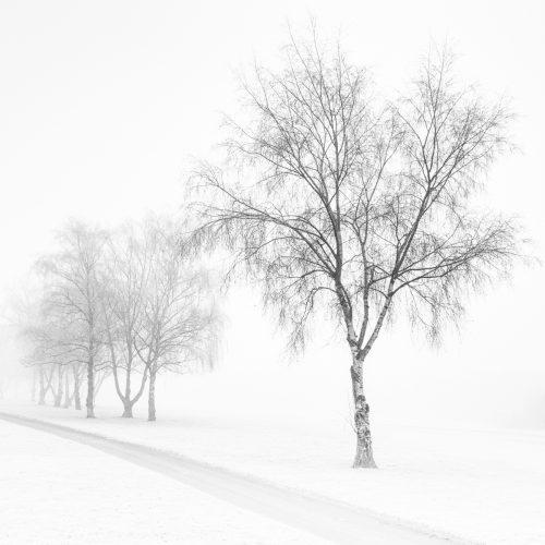 20160123_enfield_TrentParkGolfCourse_The-Big-Freeze