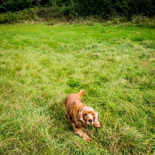 20161012_Hillingdon_Celandine-Route_Dog-in-the-grass