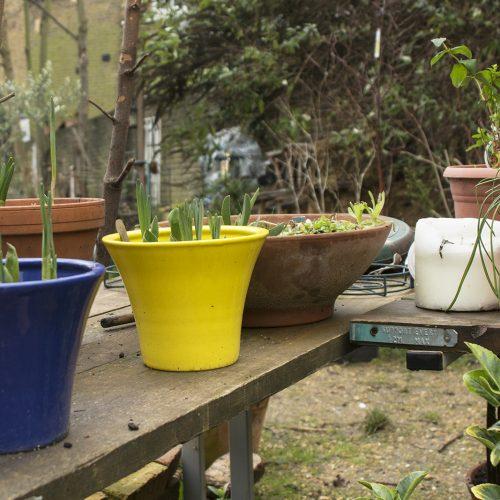 2017-05-12-Greenwich_Community-Garden_Peyton-Place-next-door_Winter_Detail-Spring-is-coming
