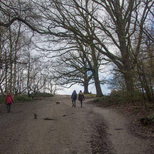 hampstead-heath-4