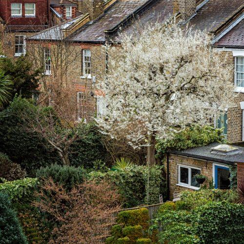 Backyard-Blossoms