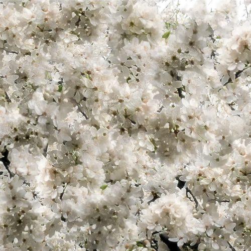 Spring-Blossom-03