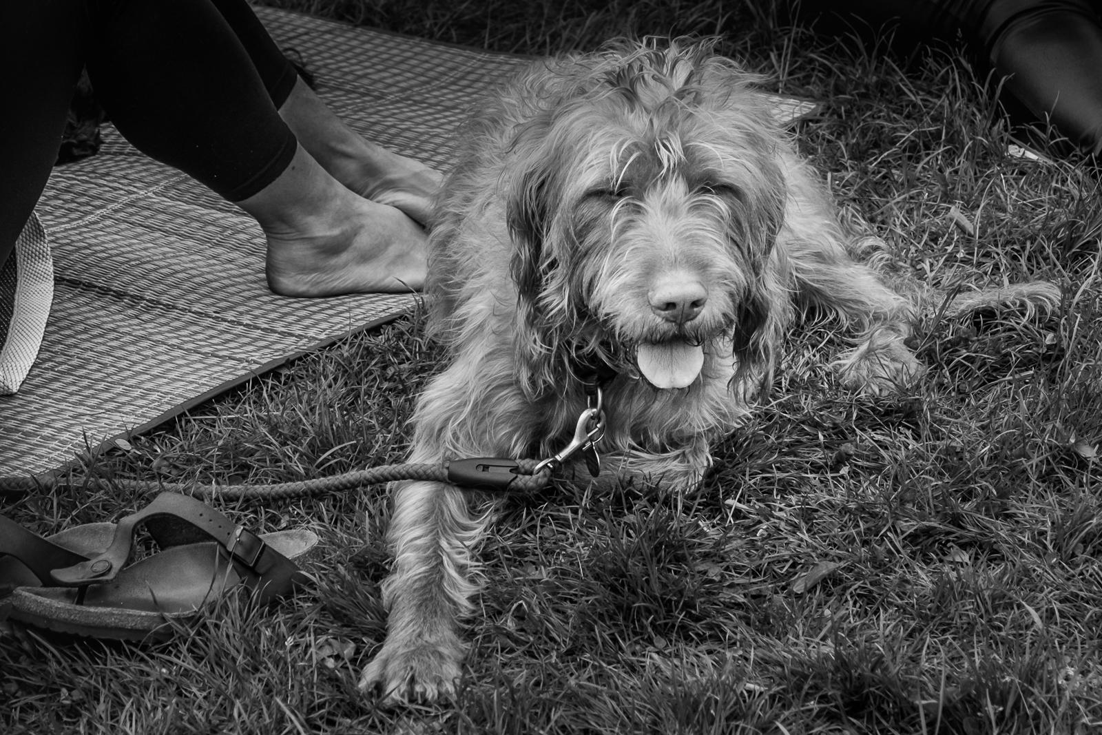 20160604_Lewisham_Hilly-Fields_Shaggy-Dog-Story