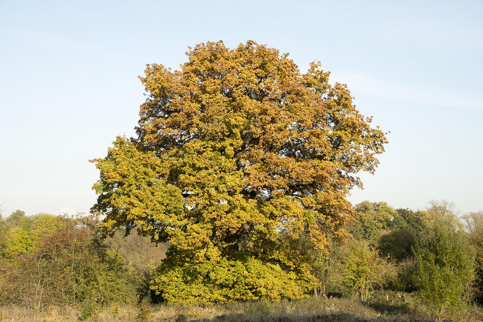 20161111_Bromley_Scadbury-Park-Nature-Reserve_Flora_Winter_Autumn-leaves