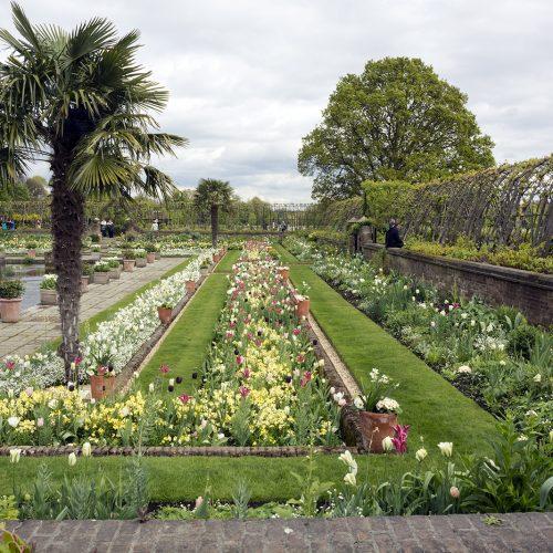 2017-04-17-Kensington-and-Chelsea_Landscape_Spring-Keknsington-Palace-Gardens