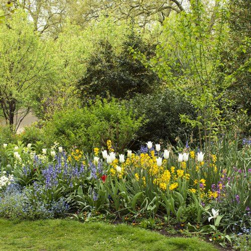 2017-04-17-Westminster_St-Jamess-Park_Spring_Flora-Flower-beds