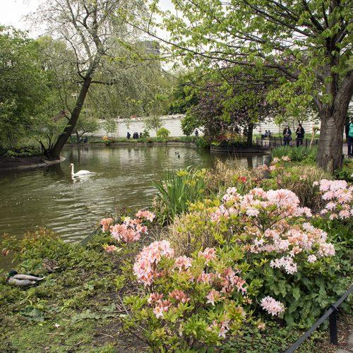 2017-04-17-Westminster_St-Jamess-Park_Spring_Landscape-The-Lake-near-Buckingham-Palace