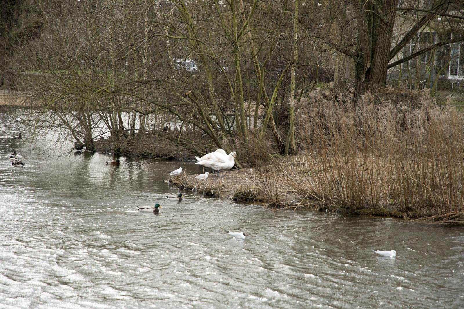 20170223_Richmond_Barnes_Landscape_Winter_Barnes-Pond-even-the-birds-look-cold