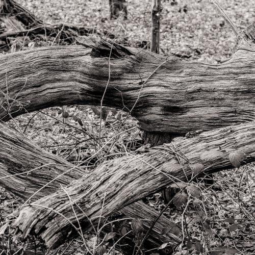 20170301_Enfield_Whitewebbs-Woods_Storm-Doris-fell-the-trees