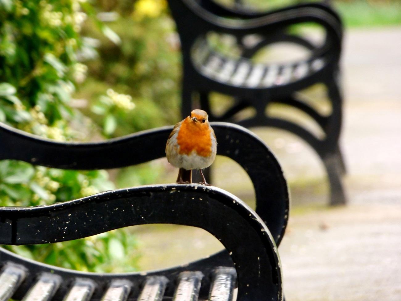 20170320_Tower-Hamlets_Grove-Hall-Park-Memorial-Garden_Dropping-in-to-say-hello