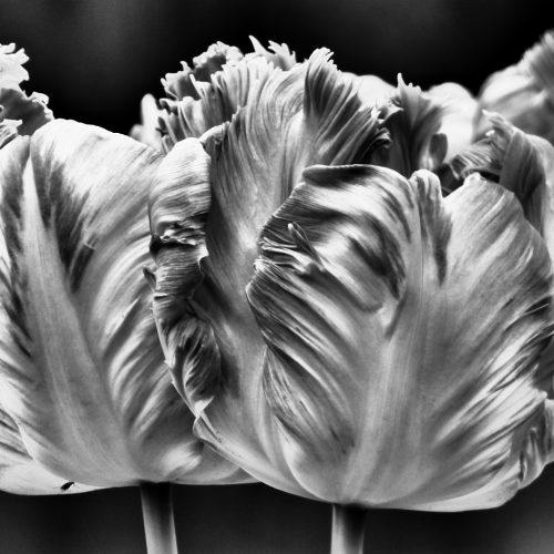 20170407_Westminster_Kensington-Gardens_Italian-Gardens-in-Black-and-whiteWestminster_Italian-Style