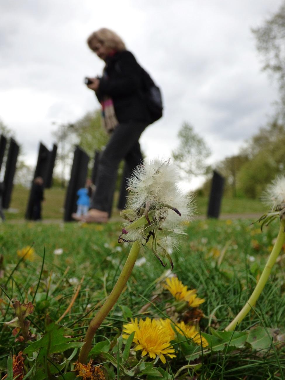 20170407_Westminster_New-Zealand-War-Memorial-Garden_Blown-away