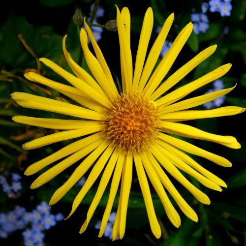 20170407_Westminster_St-Jamses-Park_Flower-in-spring