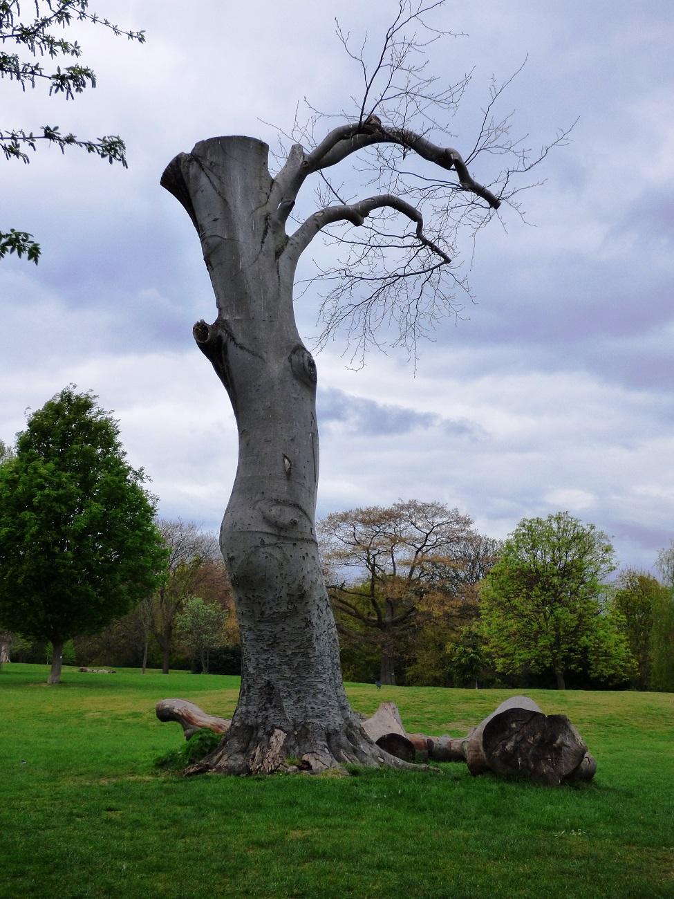 20170414_Hackney_Springfield-Park_Chopped-Tree-in-Springfield-Park