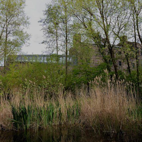 20170415_Camden_Camley-Street-Natural-Park_Marshland-over-Regents-Canal