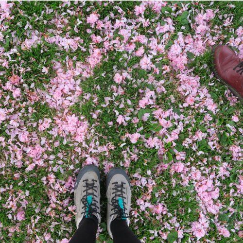 blossom-carpet-17-april17